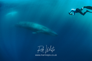 ./galleries/blue_whales/images/thumbnails/_ROB7428.jpg